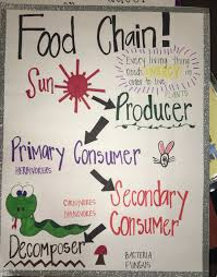 Chain Grade Chart Anchor Chart For Food Chain 3rd Grade Science Anchor