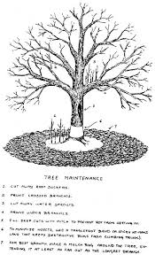 Best 25 Prune Fruit Ideas On Pinterest  Pruning Fruit Trees Cherry Fruit Tree Care