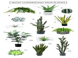 good house plants best houseplants by safe for cats indoor good house plants best houseplants by safe for cats indoor