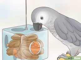 How To Feed An African Grey Parrot 12 Steps With Pictures