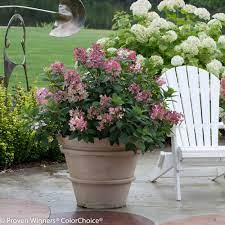 can i grow shrubs in containers