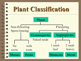 Plant Classification Lessons Tes Teach