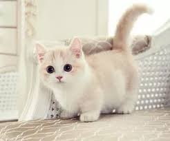 cute fluffy cats tumblr. Unique Tumblr Pinkheartsandsparkledreamstumblrcom Cute Kitty Fluffy Kittens  Kitty White On Cats Tumblr T