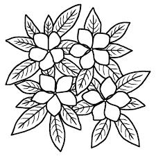 ニチニチソウ日日草白黒夏の花無料イラスト素材