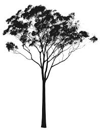 Valuable Design Ideas Gum Tree Silhouette Eucalyptus Vector Art