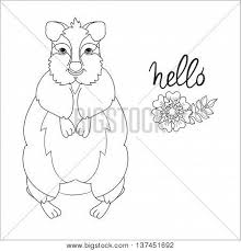 Small Picture Quokka Images Illustrations Vectors Quokka Stock Photos