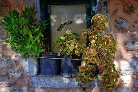 12 Container Garden CombosContainer Garden Ideas For Shade