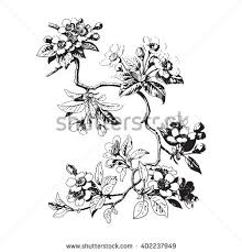 hand drawn sakura branch background with blossom cherry tree branches botanical twig of leaves