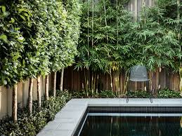 Small Picture A wall of trees and bamboo help to hide a fence and create a soft