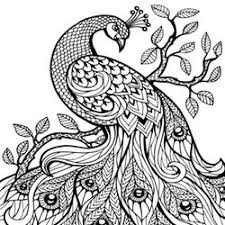 Small Picture Peacock coloring pages for adults free to print online
