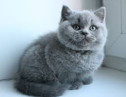 Pin by Ava Reid on Katzen Lieben | Cute cats, Cats, Pretty cats