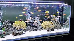 Đèn led bể cá có tốn điện không