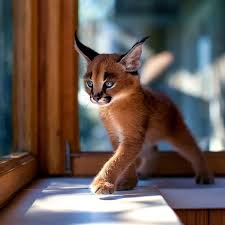 cute baby cats for sale.  Cute On Cute Baby Cats For Sale P