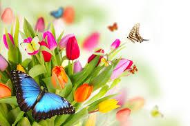 Картинки по запросу цветы