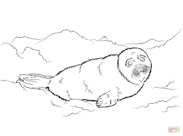 Cute Harp Seal Baby Coloring page | Free Printable Coloring Pages ...