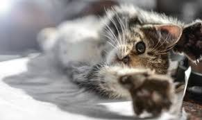 Katzensprüche Und Katzengeschichten