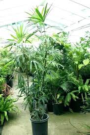 identifying house plants common indoor house plants identifying house plants house plants types hybrid house plants