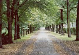 Resultado de imagen para Berlin Tiergarten Park
