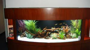 Fascinating Modern Fish Tank Decorations Pictures Ideas