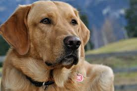 treating cancer in pets