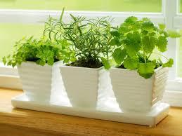 countertop herb garden on