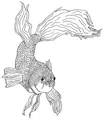 Small Picture Siamese Fighting Fish Coloring Pages Two Siamese Fighting Fishes