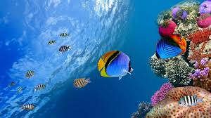 Fish Backgrounds 71 Tropical Fish Wallpapers On Wallpaperplay