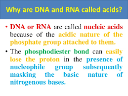 Functions Of Nucleic Acids Why Are Dna And Rna Called Acids And Functions Of Nucleic Acids