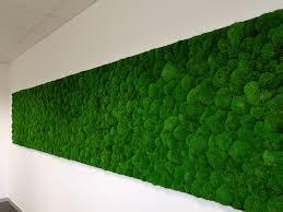 Greenmood Design Wisag_de_greenmood_preseved_ballmoss C6b6c25b F23f 4d3d 996b