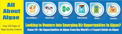Cultivation Of Algae Photobioreactor Oilgae Oil From Algae