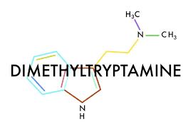 Image result for dimethyltryptamine molecule