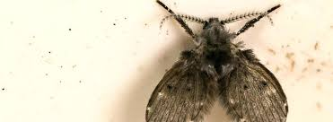 drain flies home depot in shower pan bathroom and kitchen images image how can i