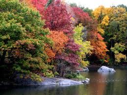 autumn backgrounds fall desktop