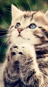 cat wallpaper iphone 5. Perfect Cat Baby Cat Looking Up Wallpaper Inside Iphone 5