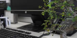 add a bonsai to your office interior design add bonsai office interior