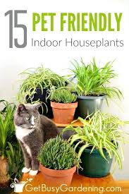 cat safe indoor plants houseplants and pets always get along but some can be pet house cat safe indoor plants