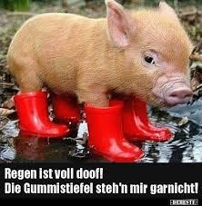 Regen Ist Voll Doof Die Gummistiefel Stehn Mir Lustige Bilder