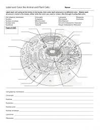 Venn Diagram Plant Cell And Animal Cell Diagram An Animal Cell Simple Prophase Diagram New Diagram The