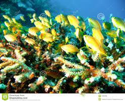Pesci tropicali della barriera corallina fotografia stock