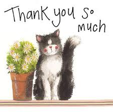 Image result for cat thank you
