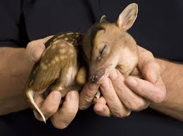 really cute baby animals pictures. Baby Deer For Really Cute Animals Pictures