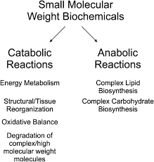 Metabolomics In The Clinic A Review Of The Shared And