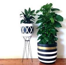 Perfect Pots For Indoor Plants Pot For Plants Sale Dragon Pots Plants Dragon Pot  Indoor Pot Plants . Pots For Indoor Plants ...