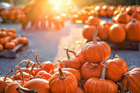 outdoor lighted pumpkin decorations luxury pumpkin patches in oklahoma city full hd wallpaper photos