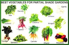 best garden vegetables. Best Things To Grow In A Small Vegetable Garden Fearless Gardener Vegetables E