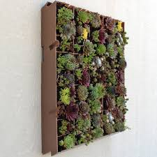 Living Wall Planter - 20in x 20in - Planted On Wall