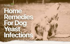 dog yeast infection home remedy