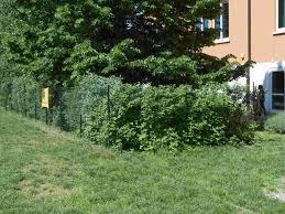 Istituto comprensivo statale di mortara pavia u2013 italia » il