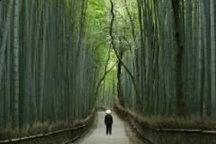 Image result for What is the best time to plant bamboo?