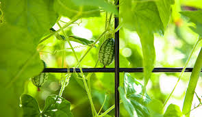 summer vegetables which veggies grow